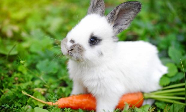 Чи можна давати кроликам бадилля моркви