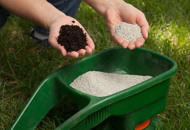 Добриво для газону: чим підгодувати траву